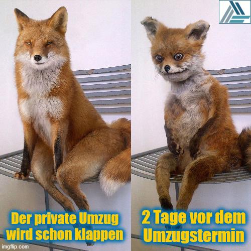 Enttäuschter Fuchs